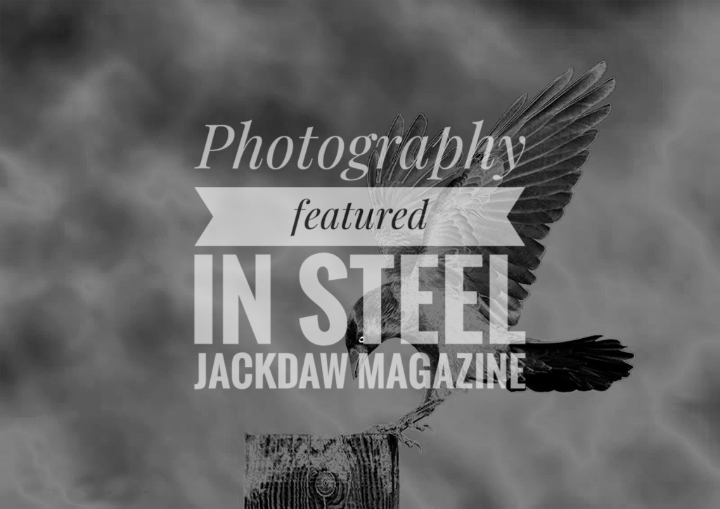 A black and white image of storm clouds. In the foreground a Jackdaw is coming in to land on a stump of wood. Over the top is a banner reading 'Photography featured in Steel Jackdaw magazine'